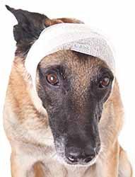 Learn how to care for your pet